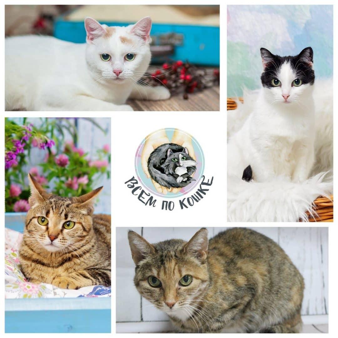 Наши котики и кошечки на фестивале WOOF
